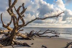 Driftwood plaża, Jekyll wyspa Gruzja Zdjęcie Stock