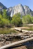 Driftwood przy jeziorem przy Górnym Yosemite spadkiem, Yosemite obywatel zdjęcie stock