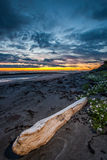 Driftwood przy plażą fotografia royalty free