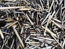 Driftwood Reeds Royalty Free Stock Images