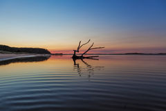 Driftwood reflections at sunrise, Australia. Royalty Free Stock Photography