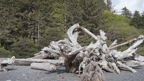 Driftwood on Rialto Beach, Washington State, USA Royalty Free Stock Photos