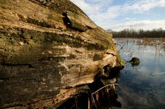 Driftwood on the river Stock Photography