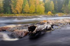 Driftwood on the rocks. Large trunk of driftwood is stuck on the rocks of Koiteli rapids in Northern Finland Stock Photos