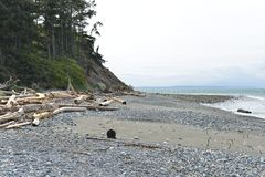 Driftwood on a Beach, Olympic Peninsula Royalty Free Stock Images