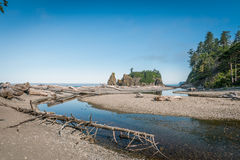 Driftwood in Ruby Beach Stock Photo