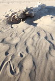 Driftwood in Sand royalty free stock image