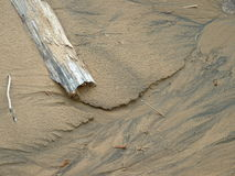 Driftwood in the sand Royalty Free Stock Photo