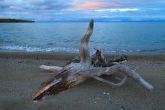Driftwood on sand beach. On sunset background Royalty Free Stock Photo