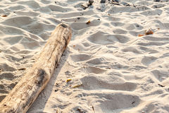Driftwood on the sand Royalty Free Stock Photo