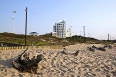 Driftwood on Sand Dunes at Durbans Beachfront Royalty Free Stock Photos