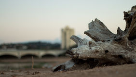 Driftwood in Sand on Rivers Edge Stock Images