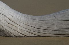 Driftwood on Sandy Beach. A piece of gray weathered driftwood in the sand Royalty Free Stock Photo