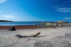 Driftwood on a sandy beach. With seaweed, rocks and horizon Stock Photos