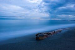Driftwood on sandy beach at South Coast, Plum Point, Jamaica Stock Photo