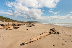 Driftwood on sandy beach Stock Images