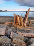 Driftwood on a sandy ocean beach Stock Images