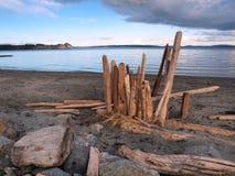 Driftwood on a sandy ocean beach Stock Images