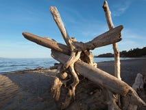 Driftwood on a sandy ocean beach Stock Photo