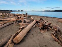 Driftwood on a sandy ocean beach Stock Photography