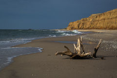 Driftwood on sea beach. Waves on background. Dark stormy sky Stock Images