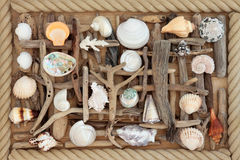 Driftwood and Sea Shell Abstract Stock Images