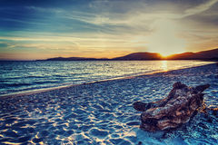 Driftwood by the sea at sunset Stock Photography