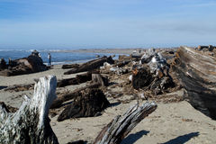 Driftwood with Seagull Stock Photos