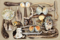 Driftwood and Seashell Abstract Stock Photo
