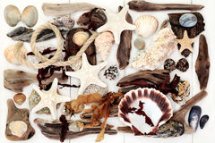 Driftwood, Seashell and Seaweed Abstract Background. Stock Photos