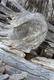 Driftwood shaped like a horn on the beach, northwestern Maine. Stock Photography
