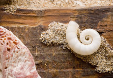 Driftwood and shells Stock Photos
