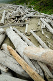 Driftwood on shore Royalty Free Stock Photos