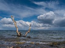 Driftwood at the shore with blue sky and clouds over the sea royalty free stock photo