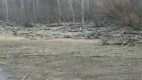 Driftwood shore stock photography