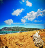 Driftwood by the shore in Porto Ferro Royalty Free Stock Photos