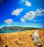 Driftwood by the shore in Porto Ferro. Italy Royalty Free Stock Photos