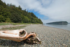 Driftwood on the shore of Shine Tidelands State Park on Bywater Bay near Port Ludlow in the Puget Sound in Washington State. USA Royalty Free Stock Photos