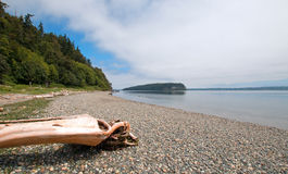 Driftwood on the shore of Shine Tidelands State Park on Bywater Bay near Port Ludlow in the Puget Sound in Washington State. USA Stock Image