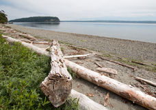 Driftwood on the shore of Shine Tidelands State Park on Bywater Bay near Port Ludlow in the Puget Sound in Washington State. USA Stock Photography