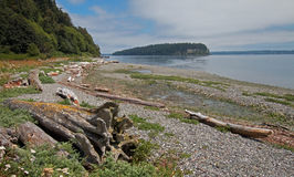 Driftwood on the shore of Shine Tidelands State Park on Bywater Bay near Port Ludlow in the Puget Sound in Washington State. USA Royalty Free Stock Image
