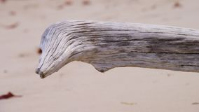 Driftwood in the shoreline of a beach stock video