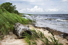 Driftwood on Shoreline Royalty Free Stock Photos