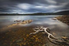 Driftwood on the shores of Foldsjoen, norwegian mountain forest royalty free stock photo