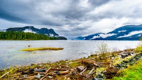 Driftwood on the shores of Pitt Lake under a dark cloudy sky with rain clouds hanging around the Mountains. Of the Coast Mountain Range in the Fraser Valley of stock image