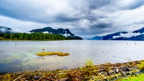 Driftwood on the shores of Pitt Lake under a dark cloudy sky with rain clouds hanging around the Mountains. Of the Coast Mountain Range in the Fraser Valley of royalty free stock photo
