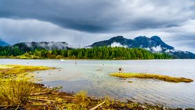 Driftwood on the shores of Pitt Lake under a dark cloudy sky with rain clouds hanging around the Mountains. Of the Coast Mountain Range in the Fraser Valley of royalty free stock image