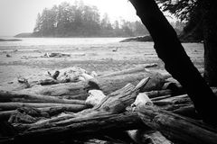 Driftwood. Shot of driftwood at the Pacific Rim National Park, Tofino,Vancouver Island,Canada stock image
