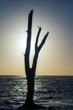Driftwood Sillouette Στοκ φωτογραφία με δικαίωμα ελεύθερης χρήσης