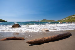 Driftwood and stone on sandy beach Royalty Free Stock Images